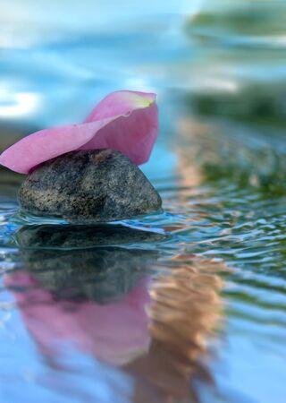 roseleaf: rose-leaf on water