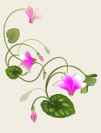 cyclamen: cyclamen beautiful design Illustration