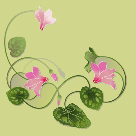 cyclamen: cyclamen decorative illustration Illustration