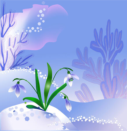 first common snowdrop in snowy landscape Vector