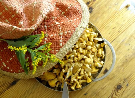mushrooming: chanterelles after mushrooming