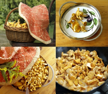 mushrooming:  chanterelles from mushrooming to cooking