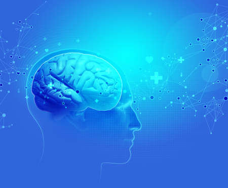 thalamus: The Human Body - Brain Stock Photo