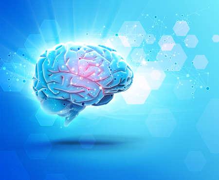 organ: brain