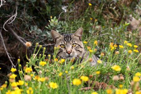 cat in the nature 写真素材