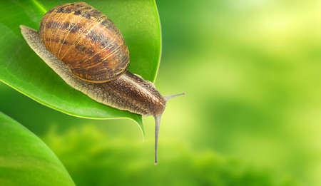 natural backgrounds: Photo of snail on green background Stock Photo