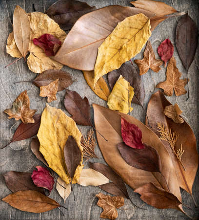 Colorful dried leaf texture in frame