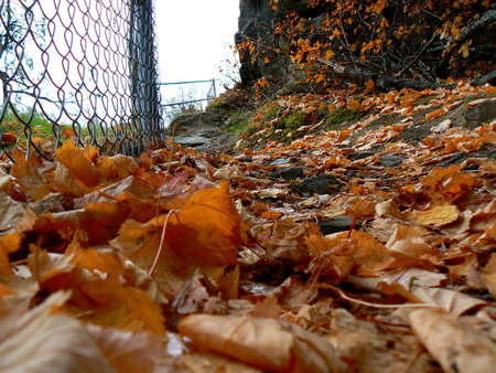 screensaver: Fall leaves by a fence