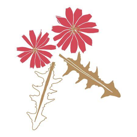 Vector chicory flower illustration. 矢量图像