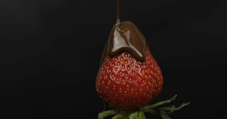 Ripe juicy strawberry are poured over melted dark chocolate on a dark background. Front view. Strawberry in chocolate on a black background. Close up