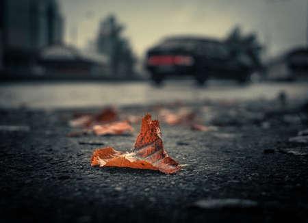 Autumn Leaf Road Street