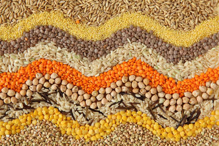Various seeds and grains close up  photo