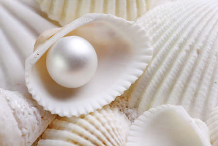 White seashells with pearl photo