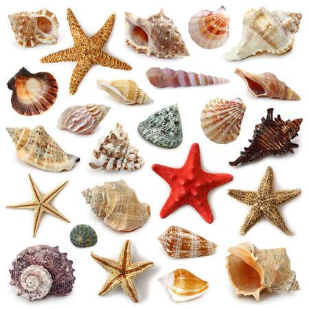 estrella de mar: Colecci�n de concha aislado  Foto de archivo