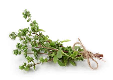 aromatic: Marjoram isolated on white background Stock Photo