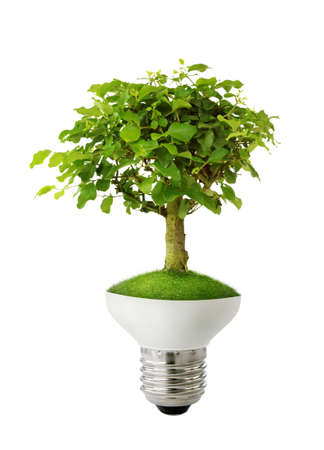 electricity background: Green tree growing out of a bulb - green energy concept