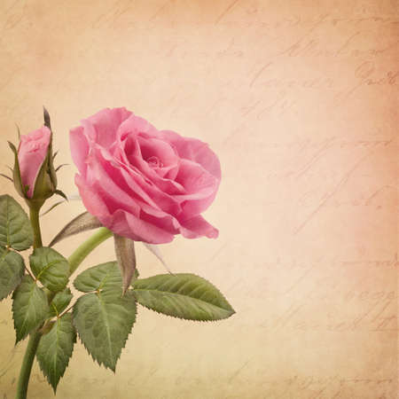 Pink rose and old letter photo