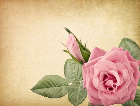 Pink vintage rose and old letter photo