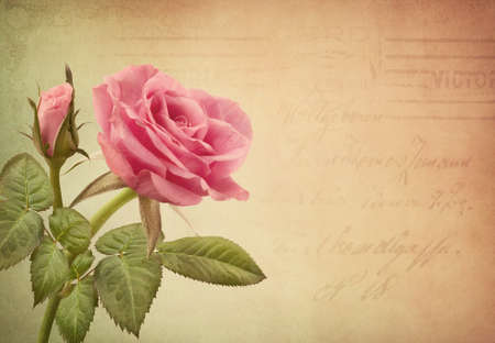 pink flower: Pink rose and old letter