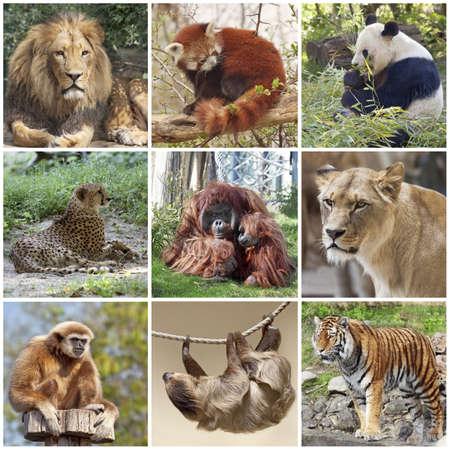 sloth: Los animales del collage con el le�n, el panda rojo, el panda, el guepardo, el tigre, el mono y la pereza Foto de archivo
