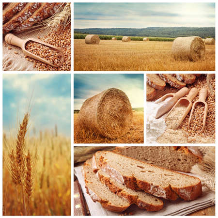 agriculture industrial: Bread and harvesting wheat collage