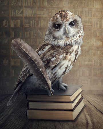 buhos y lechuzas: B�ho sabio sentado en los libros Foto de archivo