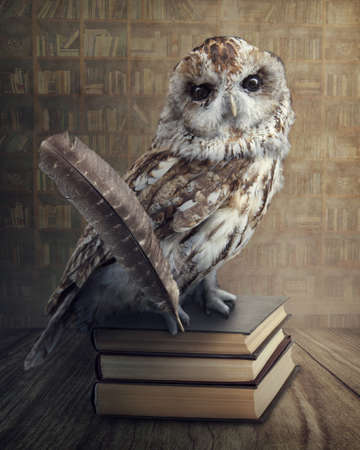 Wise owl sitting on books photo