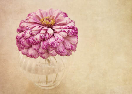 Pink flower in  a vase  photo
