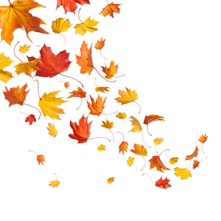 falling: Autumn falling leaves isolated on white background Stock Photo