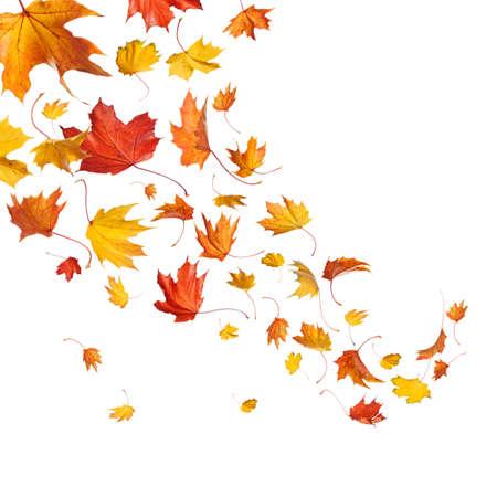 bladeren: Herfst vallende bladeren geïsoleerd op witte achtergrond