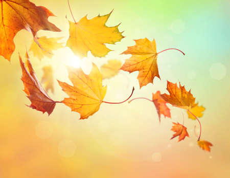 leaves falling: Autumn falling leaves on colorful background Stock Photo