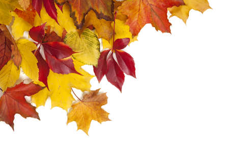 Group of colorful autumn leaves isolated on white background photo