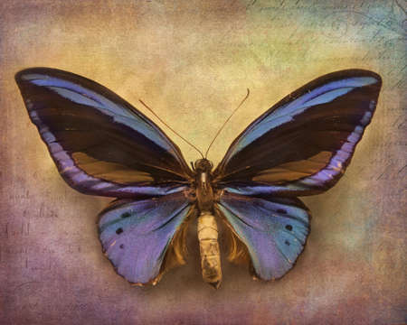 mariposa azul: Vintage background with blue butterfly