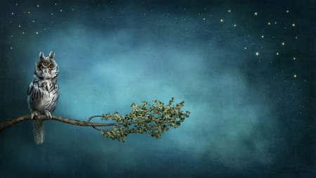 místo: Sova pták sedí na pobočce v noci