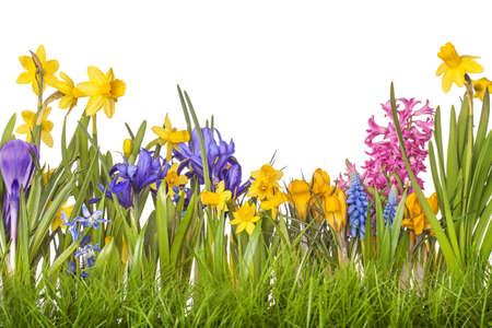 hilera: Flores del resorte en floreros aislados en fondo blanco