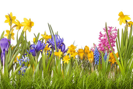 flowers horizontal: Spring flowers in vases isolated on white background Stock Photo