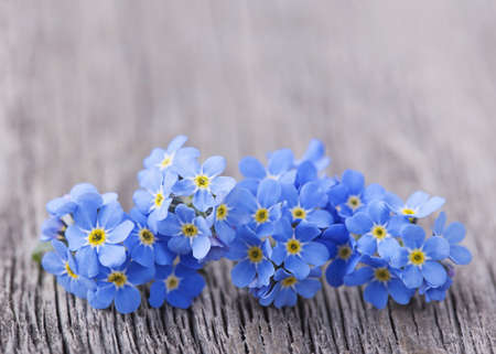Forgetmenot flowers on a wooden background photo