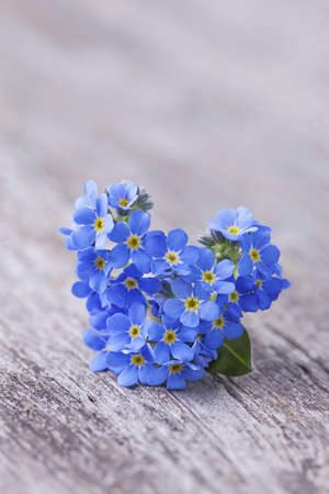 not forget: Forgetmenot flowers in heart shape on a wooden background Stock Photo