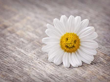 buena suerte: Flor de manzanilla sobre fondo de madera