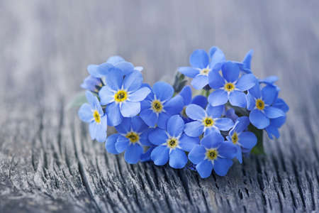 Forgetmenot flowers in heart shape on a wooden background Stock Photo - 19426590