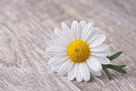 Chamomile flower on wooden background Stock Photo - 19426585