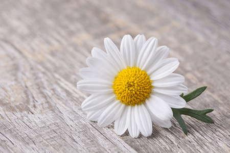 chamomile: Chamomile flower on wooden background