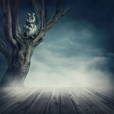 dismal: Owl sitting on the tree at night Stock Photo