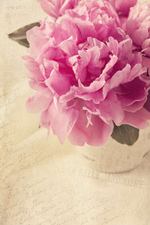 Peony flowers in a vase Stock Photo - 20410817