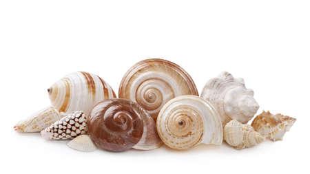 Seashells isolated on white background Stock Photo - 20461769