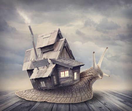 salyangoz: Bir kabuk evi ile salyangoz