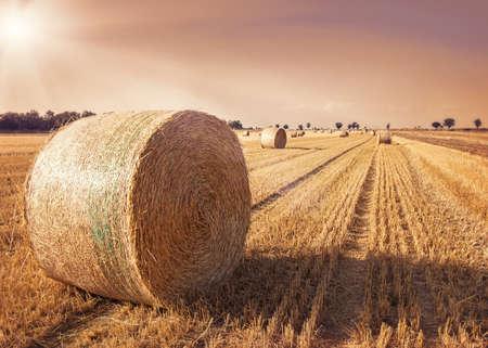 Les balles rondes de paille dans la prairie