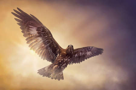 Eagle flying in the sky Archivio Fotografico