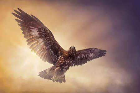 Eagle vliegen in de lucht Stockfoto - 21643483