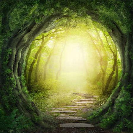 마법의 어두운 숲에서 길 스톡 콘텐츠
